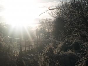 Frosty morn 12 Jan 14 076