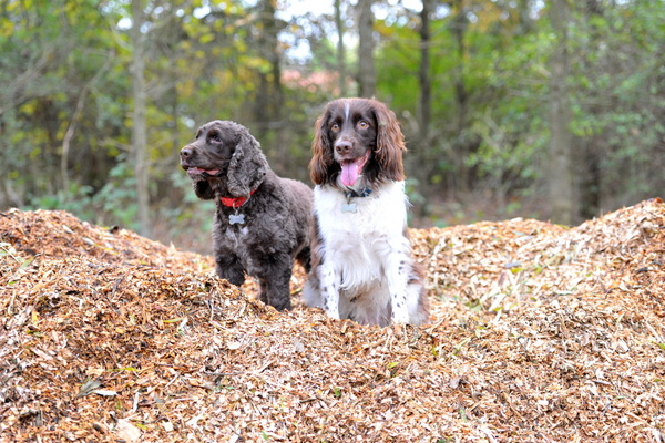 Charlie and Daisy on Chipping Mountain