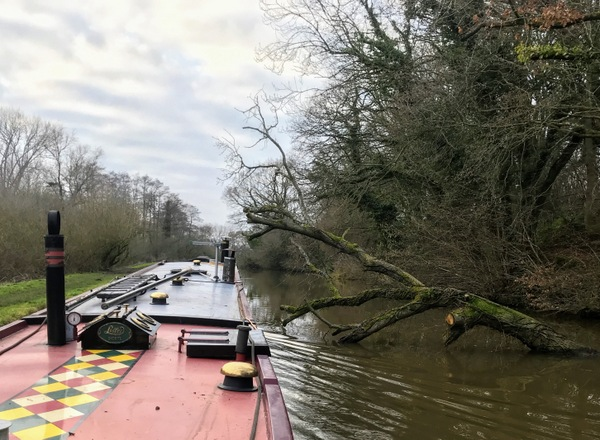 Just enough room to squeeze by. A fallen tree on the Shropshire Union canal