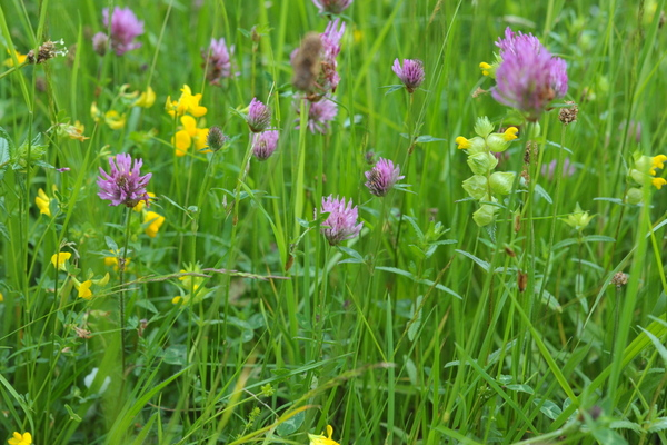 Wildflowers At Calcutt Boats