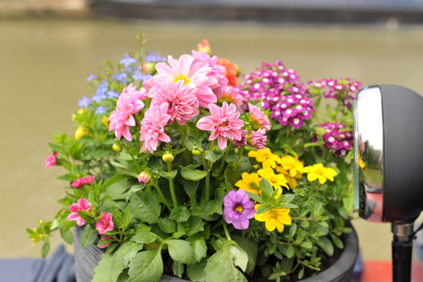 Sally's bow garden: good for the soul, rubbish for practical boating