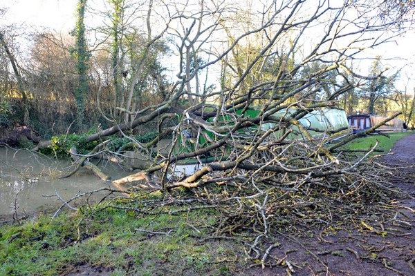 A wind blown tree falls across a narrowboat